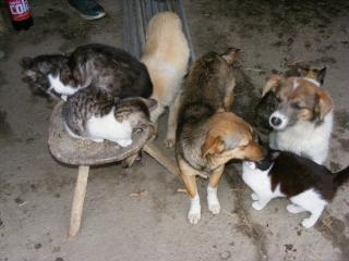 Emma, Ronja und Flavio mit Katzen