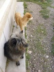 Madita und Florica