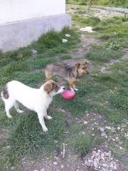 Emma und Ronja