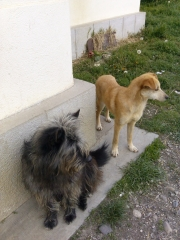 Florica und Madita